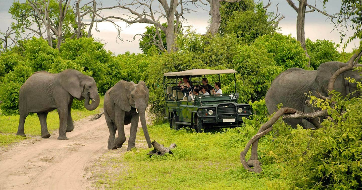 Botswana safari Chobe Game Drive