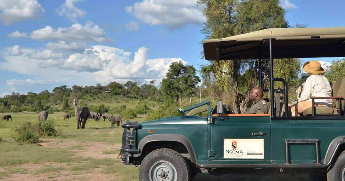See Wildlife up Close on a Game Drive During your Stay at Ngoma Safari Lodge