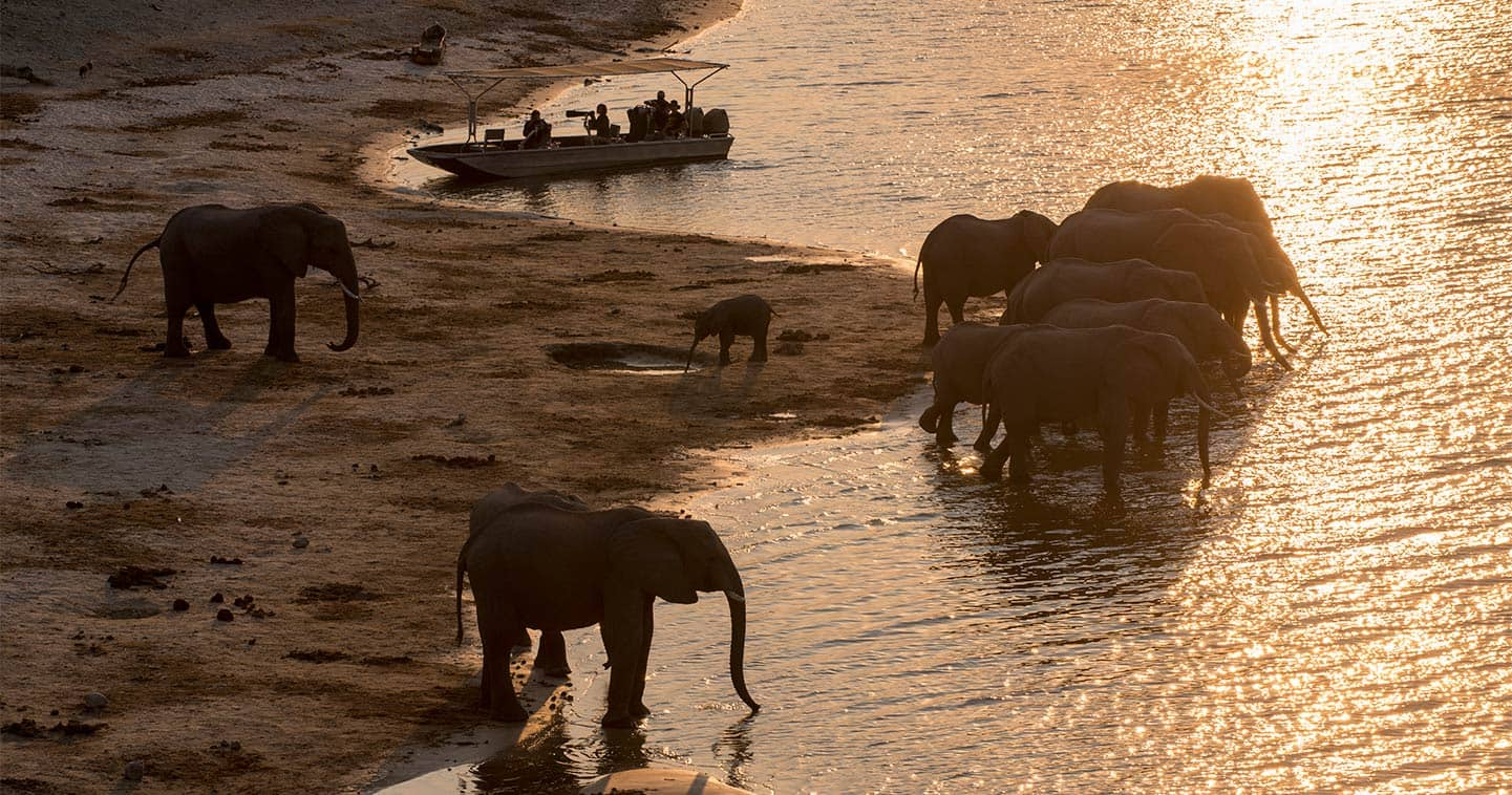See Wildlife up Close on a Water Safari During your Stay at Chobe Under Canvas