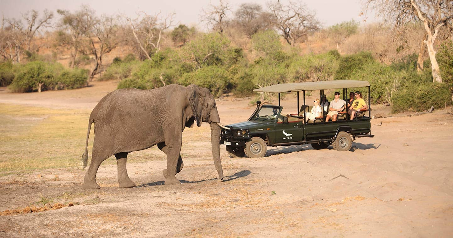 Incredible Safari Game Drive with Chobe Under Canvas