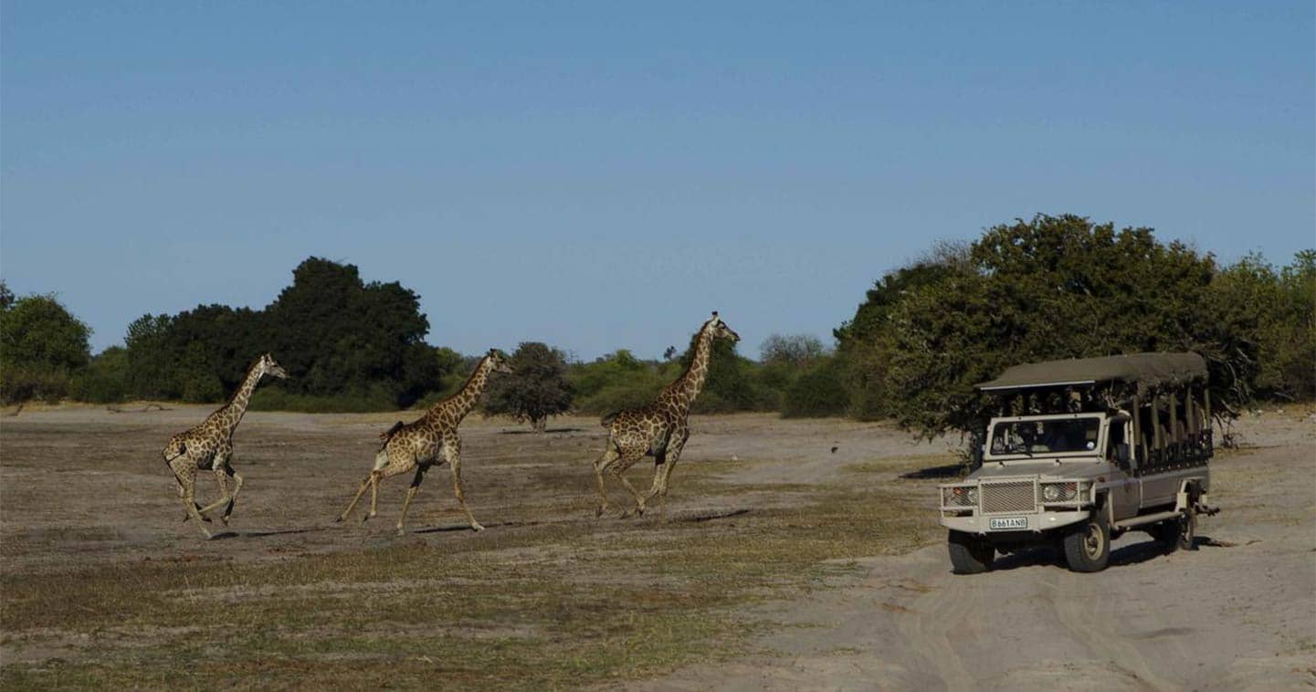 Enjoy Wildlife during a Botswana Safari when Staying at Chobe Game Lodge